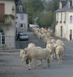 Un troupeau en transhumance passant par Rébénacq en 2014